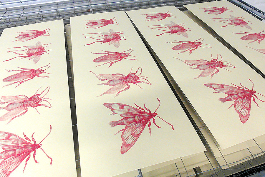 Silk screen print Insects