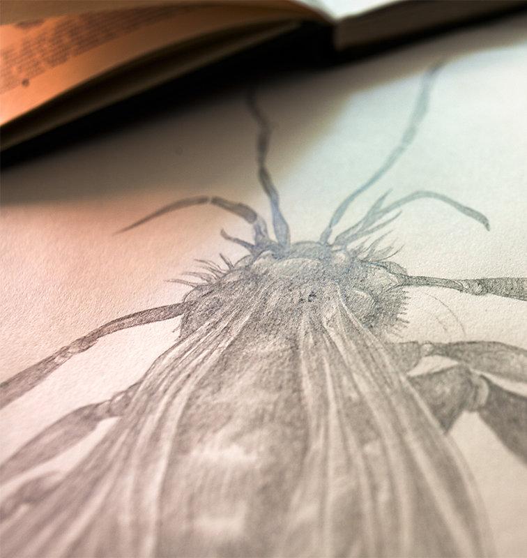 Zeichnung-Insekten-1.jpg