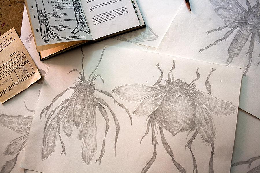 Zeichnung-Insekten-2.jpg