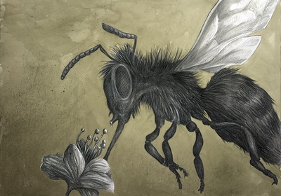 Illustration for The Colour out of Space Chapter 1 Bee sucking on flower by Andreas Hartung
